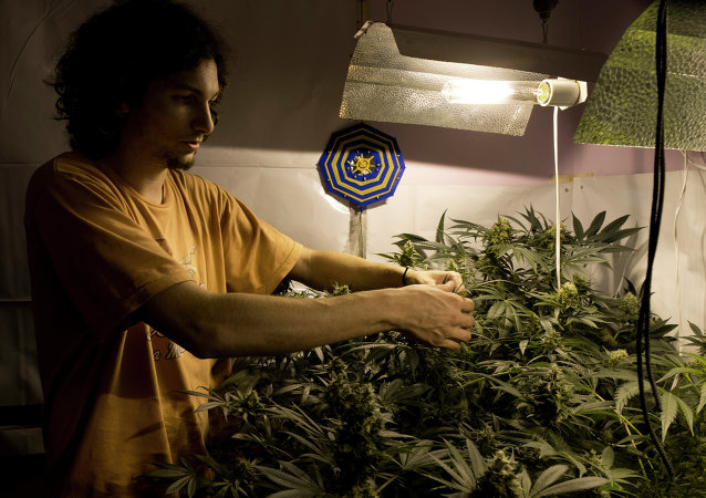 Juan Andres Palese, un cultivador de marihuana de Montevideo