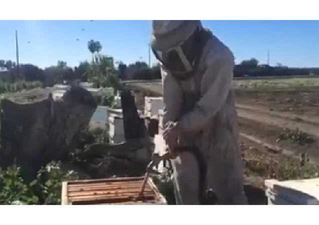 Un apicultor con mala suerte