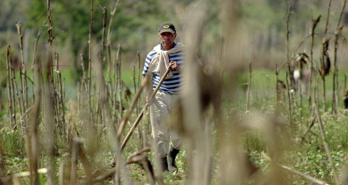 Agricultor de Guatemala