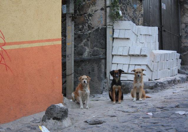 Tres perros callejeros