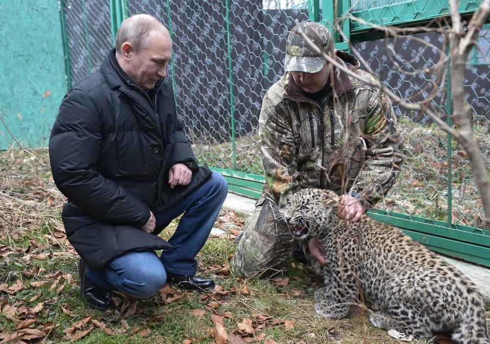 В.Путин посетил Центр разведения и реабилитации леопарда в Сочи