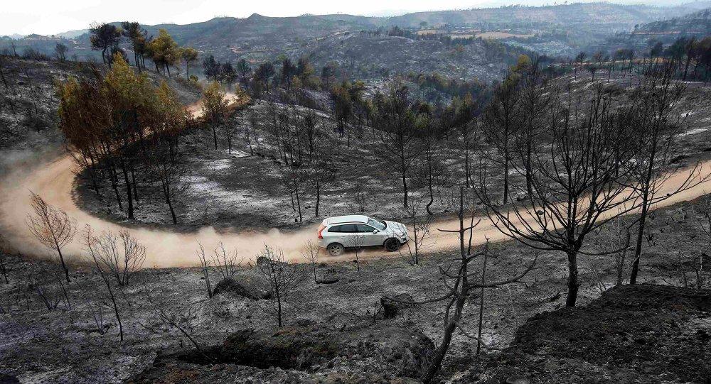Arboles quemados en un incendio forestal en Sant Salvador de Guardiola, Cataluña, el 27 de julio, 2015