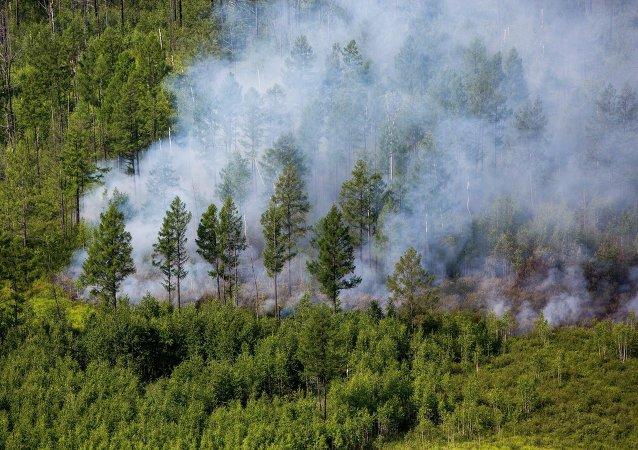 Incendios forestales en Primorie (archivo)