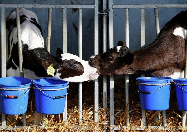 Fabricación de leche en Reino Unido