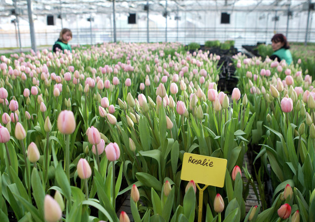 Ecuador y Rusia abordarán suministro de flores