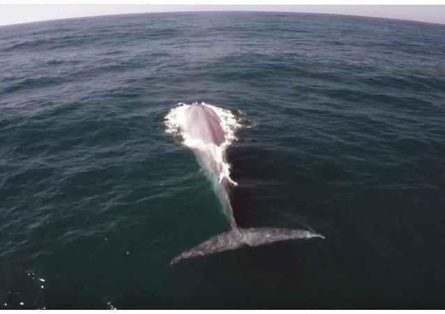 """Una ballena se cuela en el reportaje sobre ballenas """"invisibles"""""""