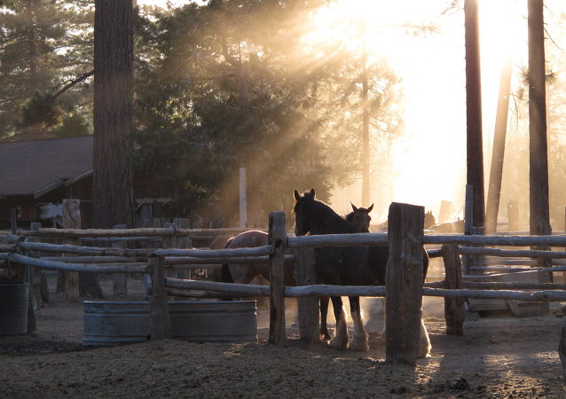 Decomisan ranchos y una cuadra de caballos de raza a cartel de Los Zetas en México