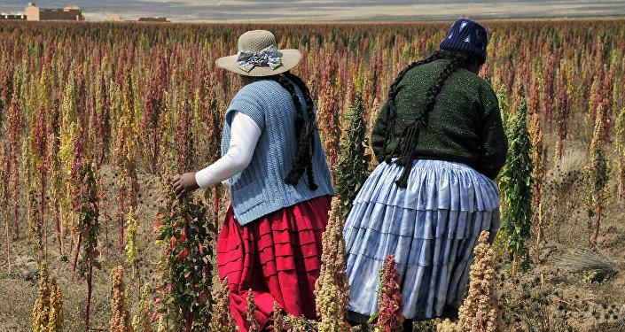Plantación en Bolivia (archivo)