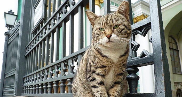 Gato de Hermitage