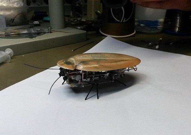 Сucaracha-robot