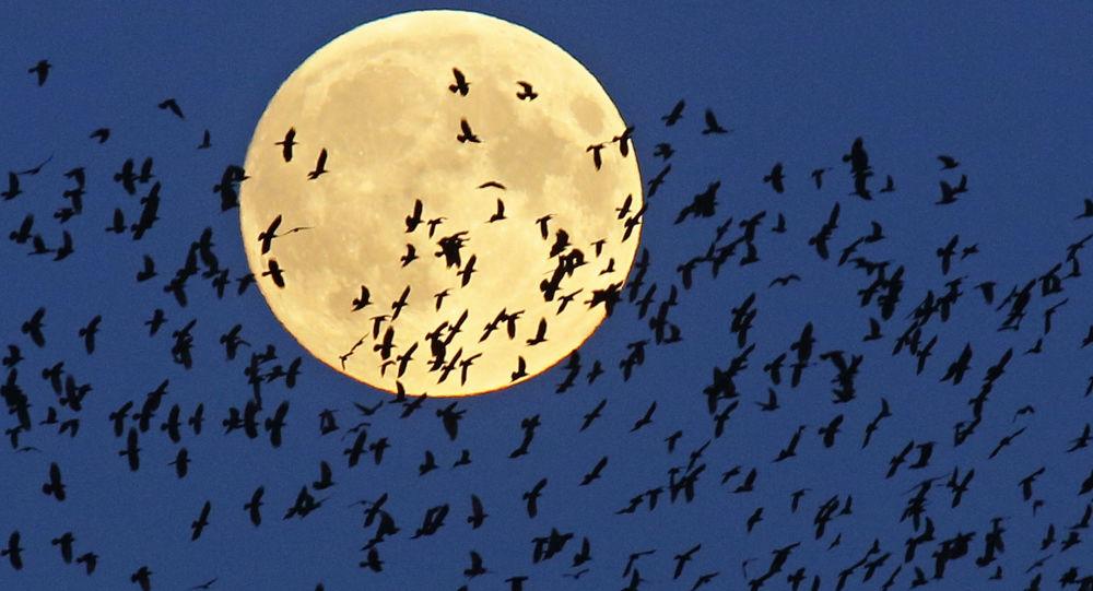 La luna más hermosa de octubre se verá hoy