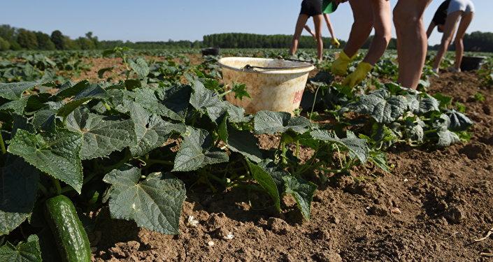 Los agricultores franceses