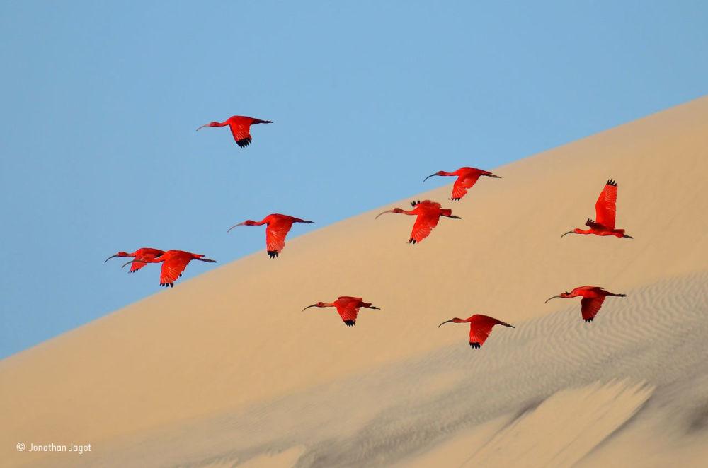 Naturaleza salvaje a través del prisma de los mejores fotógrafos del mundo