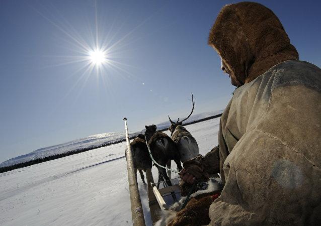 Trineo de renos en el Ártico ruso