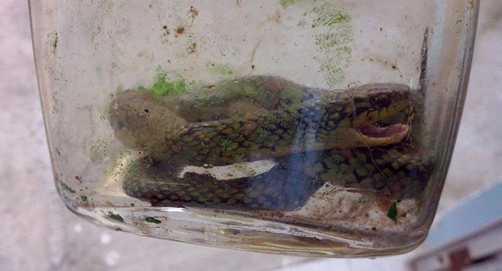 Foto de la culebra verde, matada a mordiscos por el pequeño