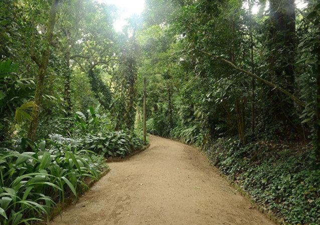 Bosques en Río de Janeiro