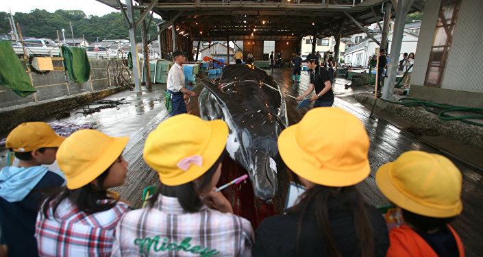 Regreso de la pesca de ballenas en Japón