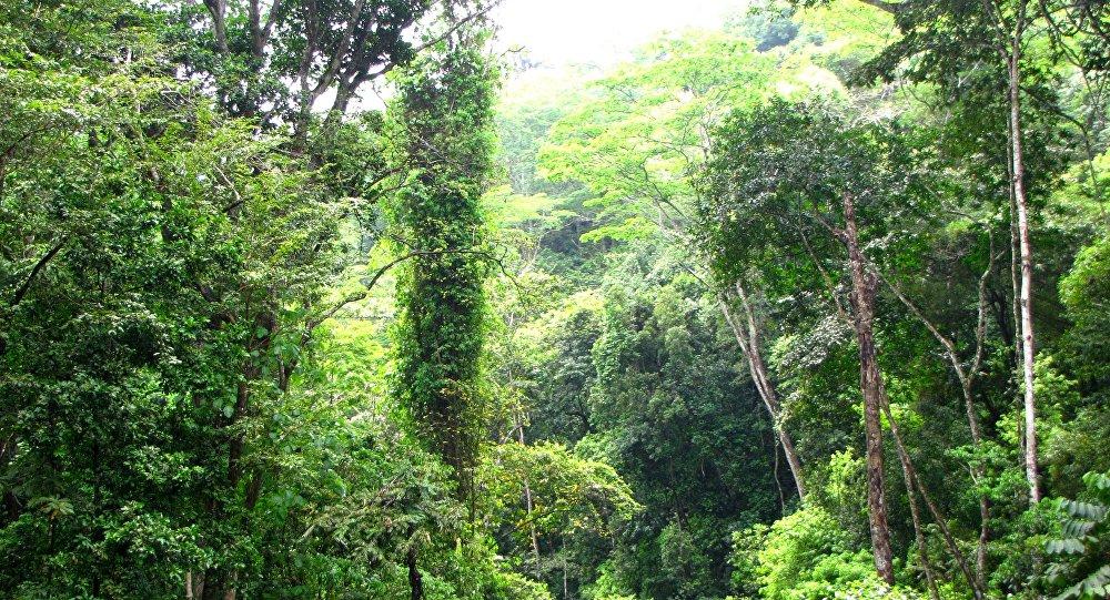 Venezuela debe priorizar la energía limpia y frenar deforestación, dicen expertos