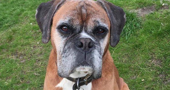 El perro Dylan clonado por una pareja británica
