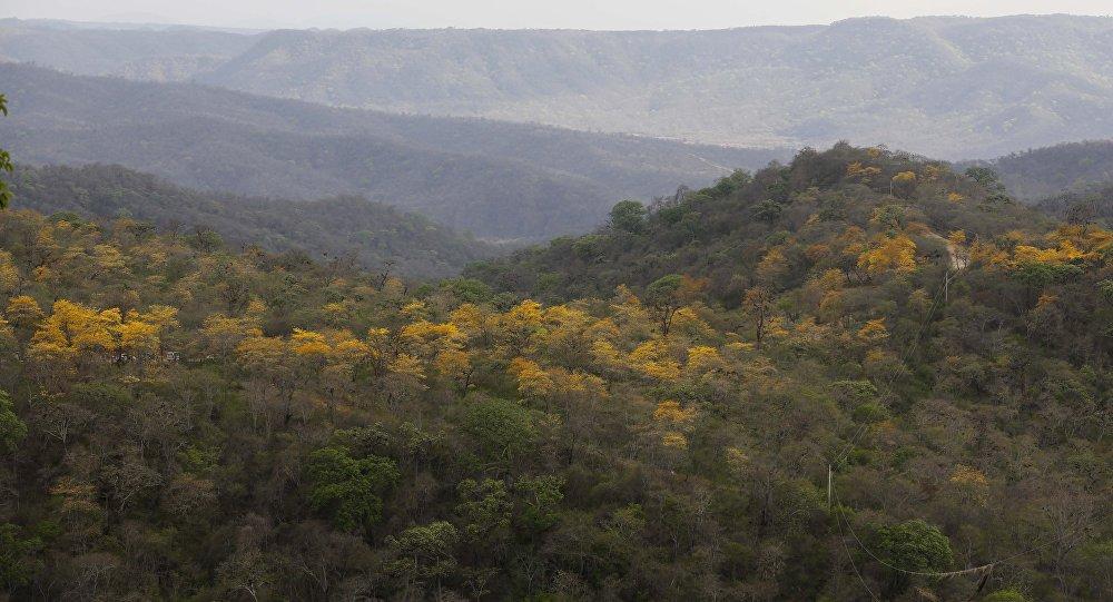 Bosque seco, Ecuador