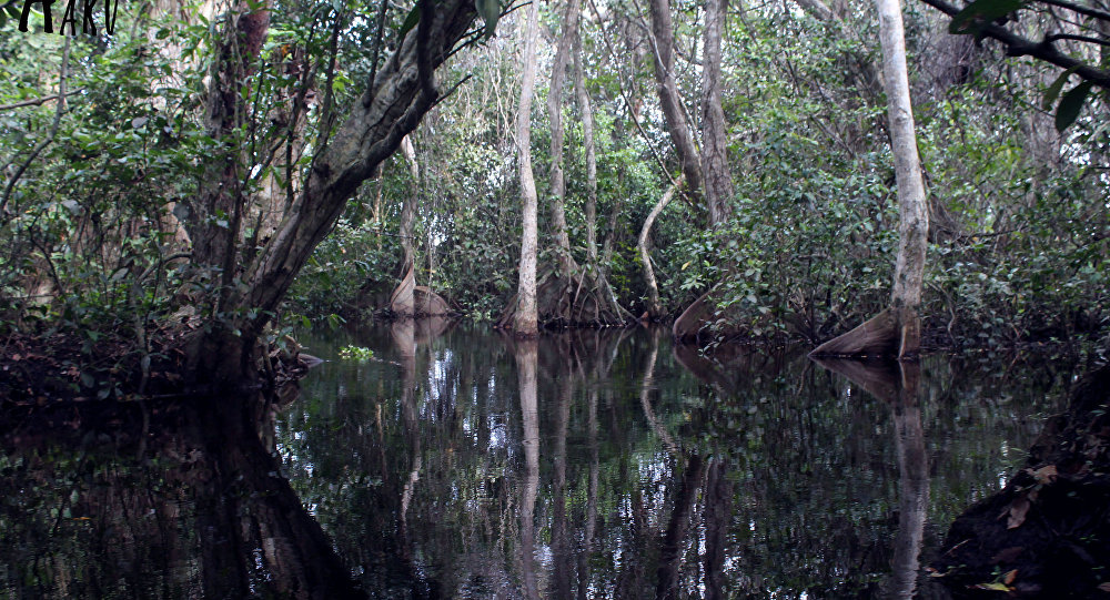 WWF pide a México detener la destrucción de manglares en Cancún