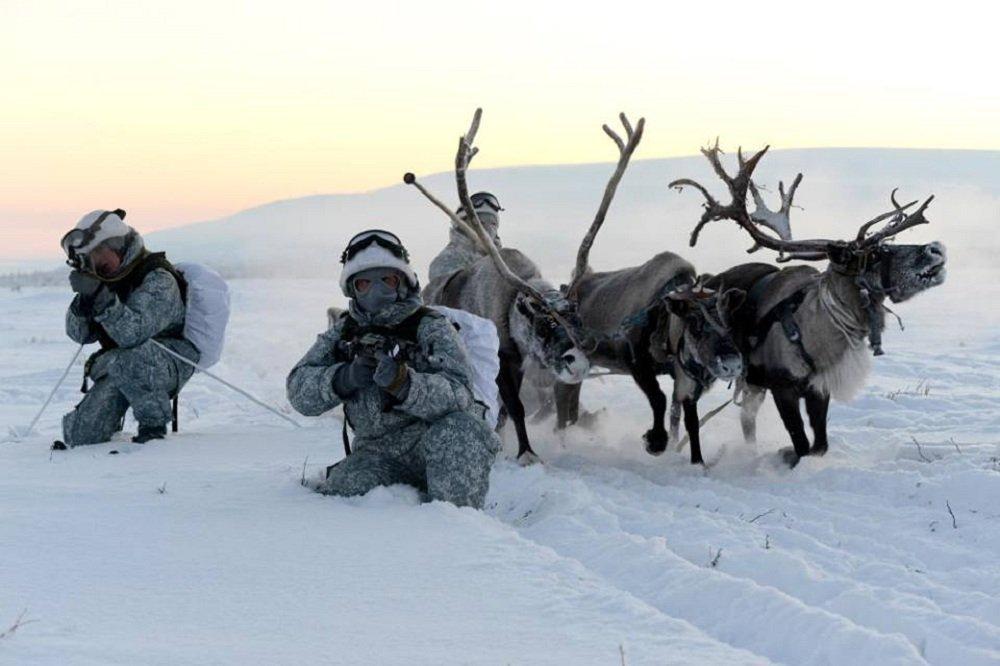 Huskies y ciervos al servicio militar ruso