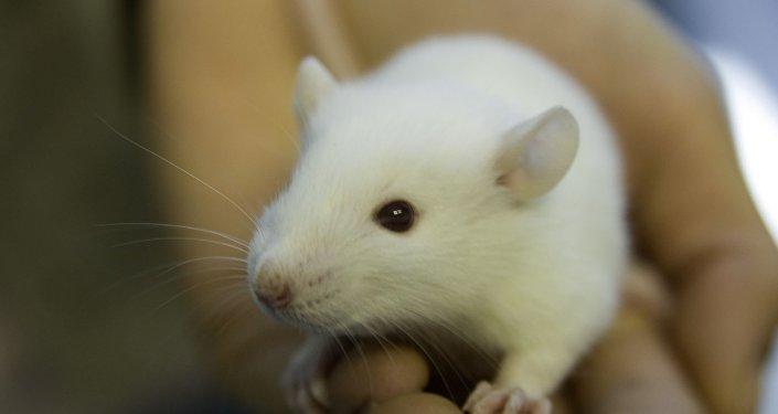 Ratón (imagen referencial)