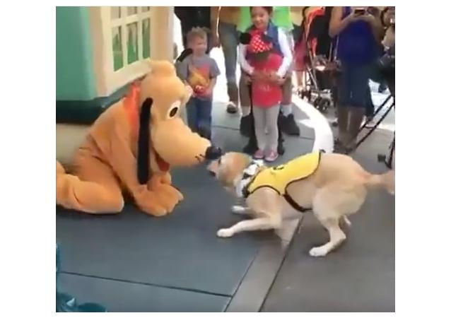 Un amigo para Pluto