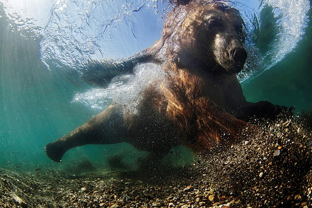 Fantasía acuática: El fotógrafo submarino del año 2016