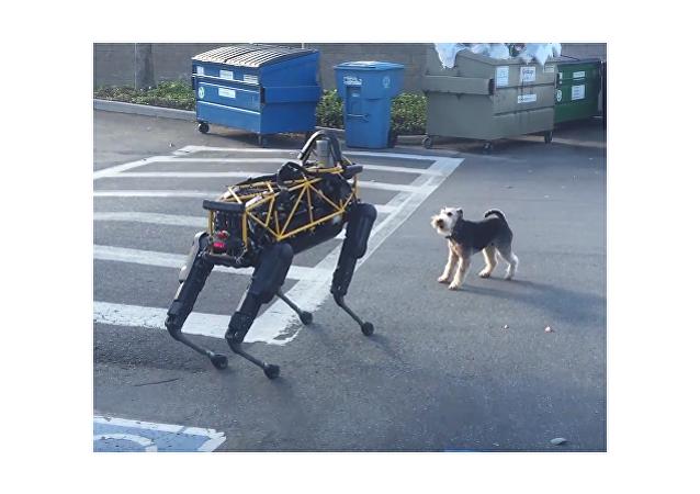 Conflicto entre un perro robótico y uno real