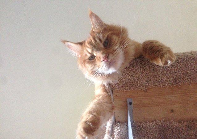 Un gato mira a su dueño con altivez