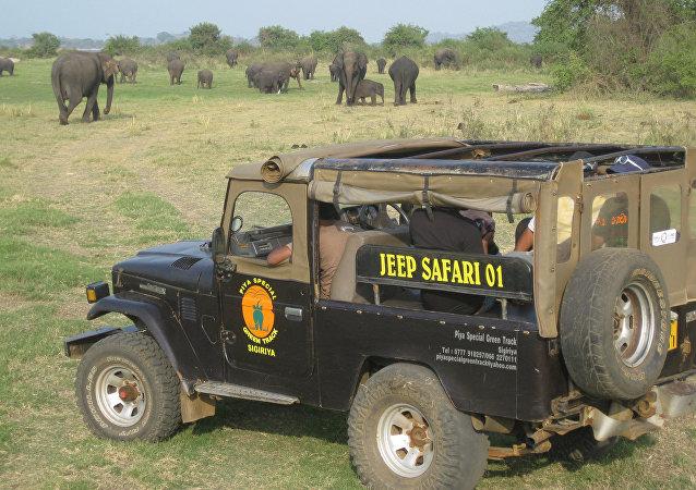 El coche para safari