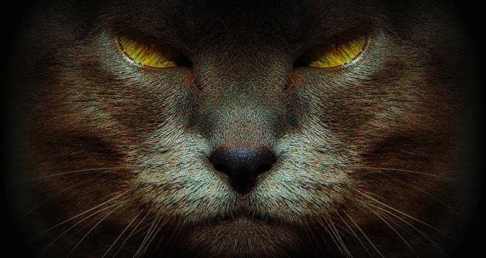 """Un gato capitalista devora Londres en protesta de la """"gentrificación"""""""