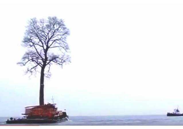 Un árbol en el mar Negro