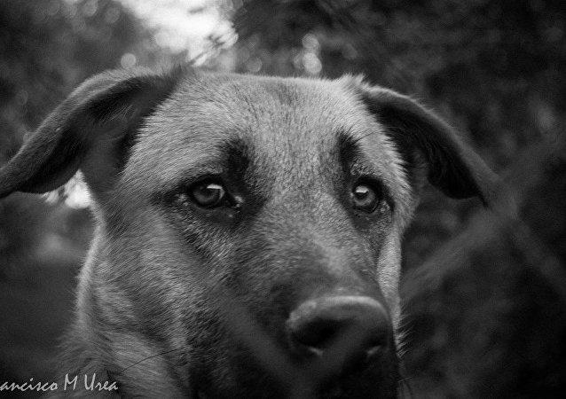 Perro con los ojos tristes