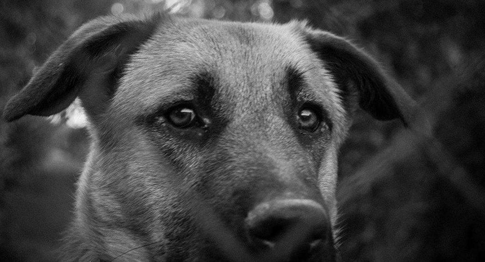 Conmovedor: La Tristeza De Una Perra Al Darse Cuenta De