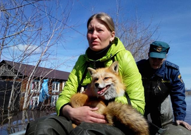 Equipo de rescate evacua a los animales del zoológico en Tiumén