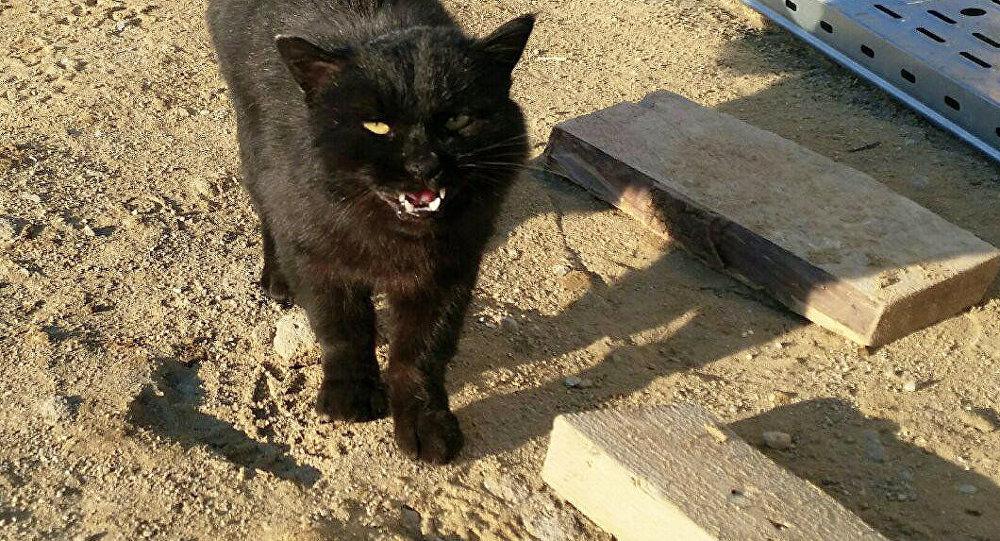 El gato que vive en el cosmódromo Vostochni