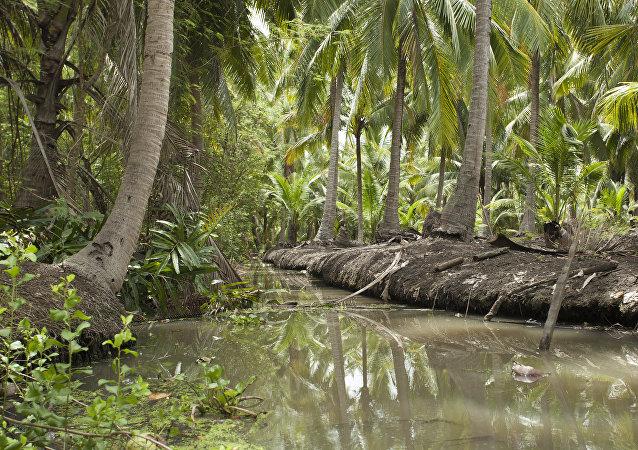Una selva en Tailandia