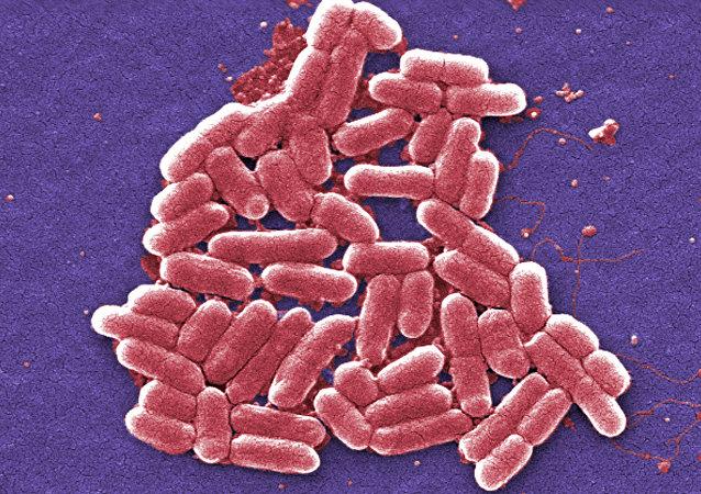 Superbacteria ultrarresistente hallada en EEUU
