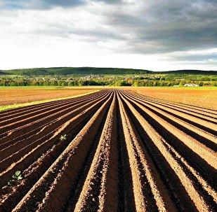 Tierra agrícola