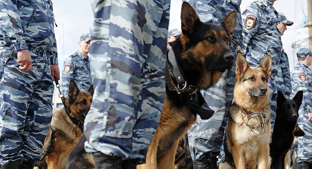 Perros de la Unidad Canina de Rescate del Ministerio de Situaciones de Emergencias de Rusia