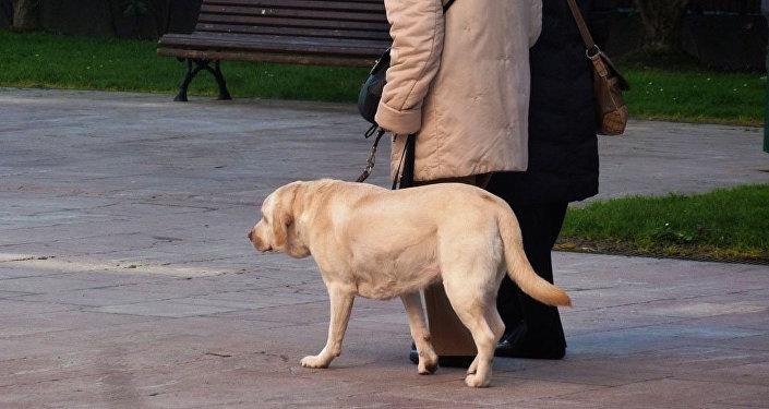 Mascota (imagen referencial)