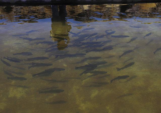 Aguas del río Silala en Bolivia (archivo)