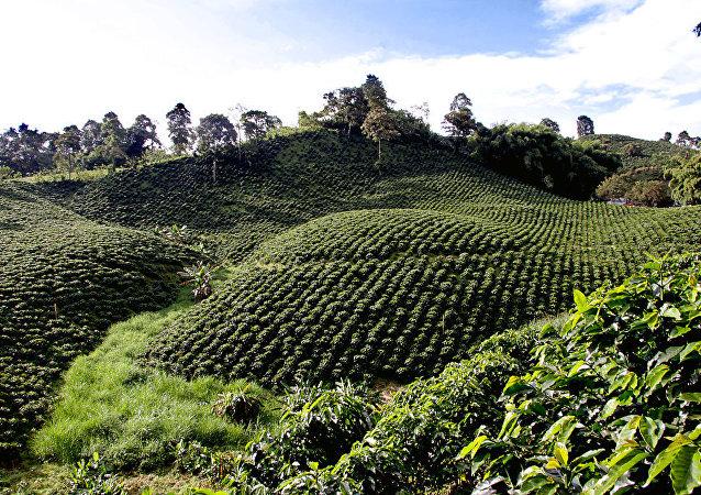 Campo de cultivo en Colombia (archivo)