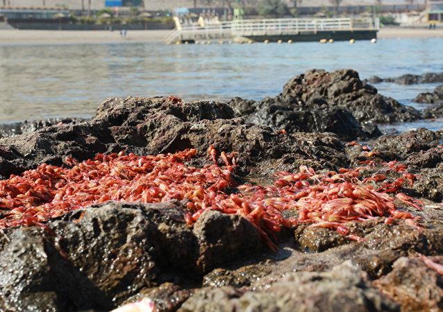 Consecuencias de la marea roja en Chile