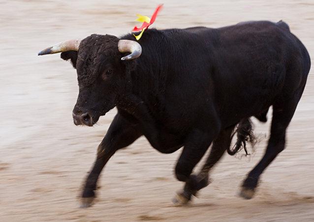 Un toro (archivo)