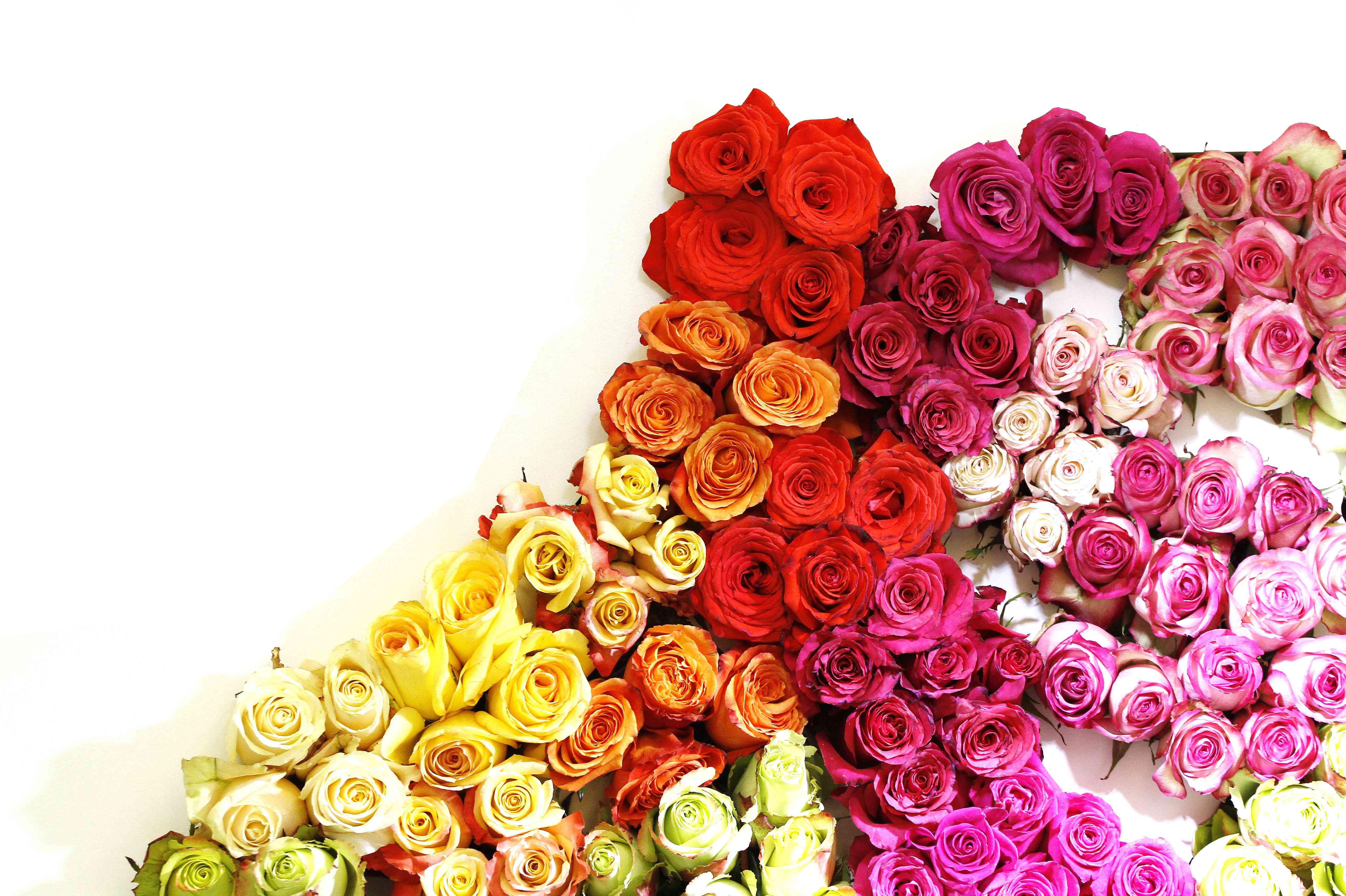 Las flores de Ecuador