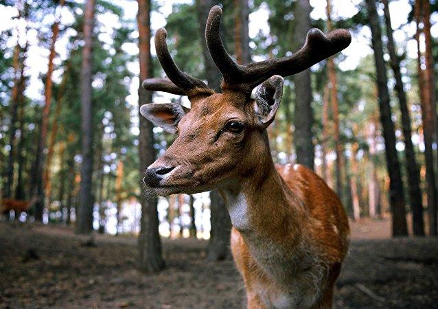 Un ciervo en un bosque
