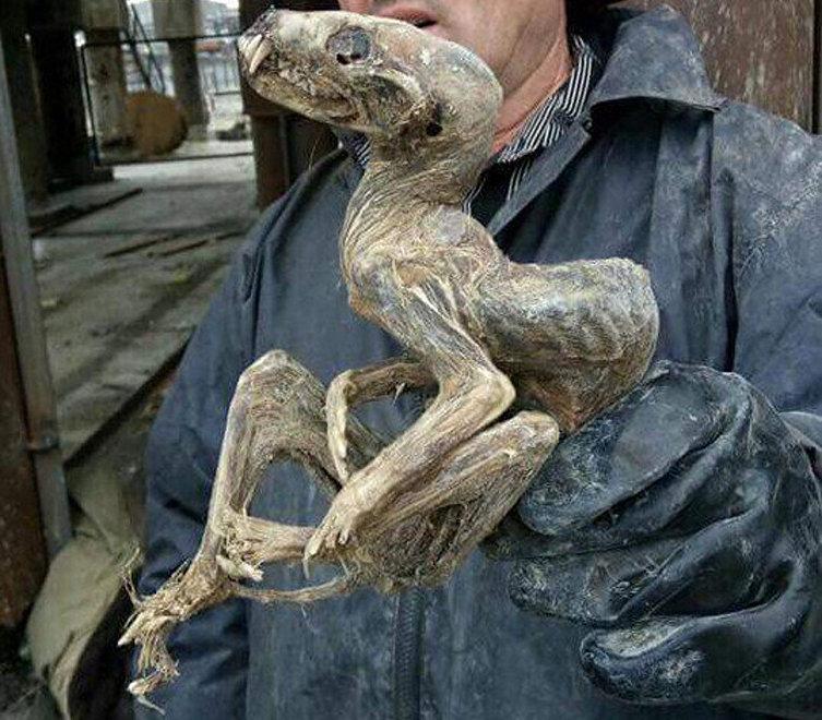 Hallan en Siberia un misterioso 'monstruo' momificado